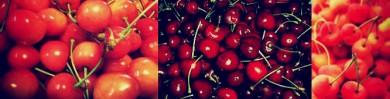 〈左から 佐藤錦・bing cherry・Rainier Cherry〉